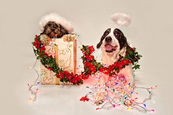Craig-David-Butler-Christmas