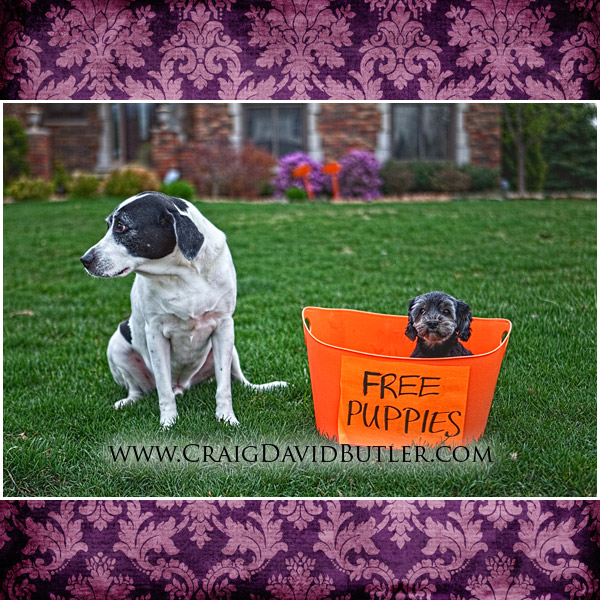 Craig David Butler Studios Northville Michigan, Animal Dog Portraits
